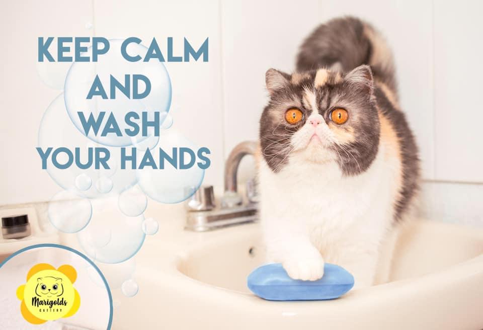 Dclass Cornelia recomienda lavarse las manos