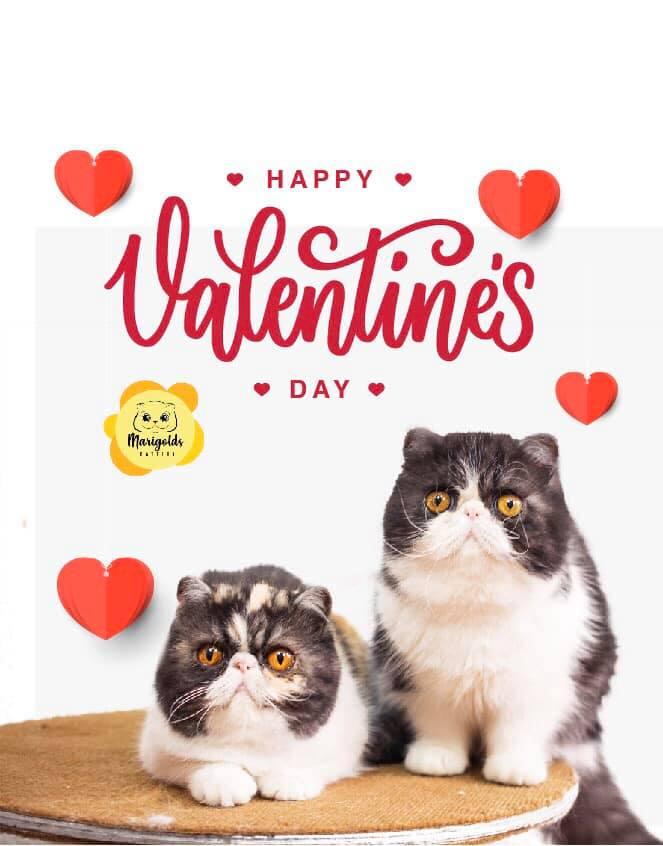 Feliz día del amor, 2020