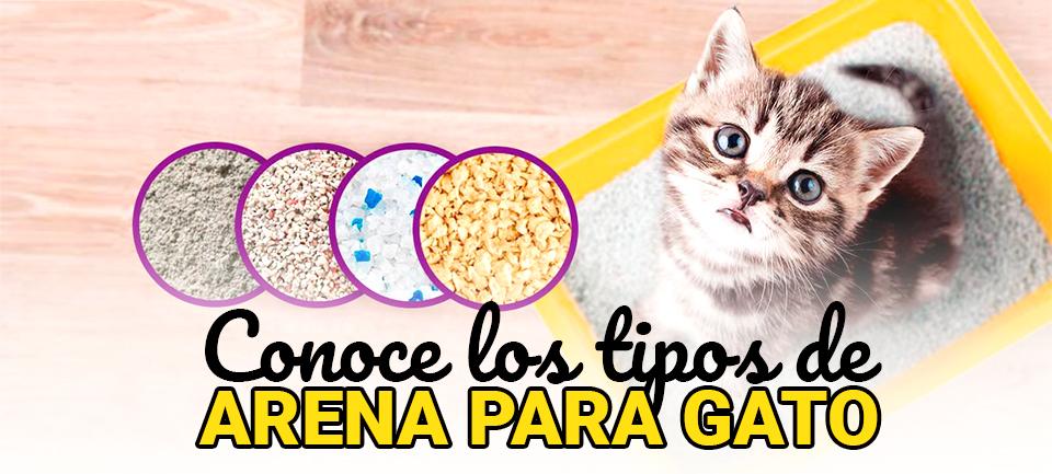 tipos de arena para gato
